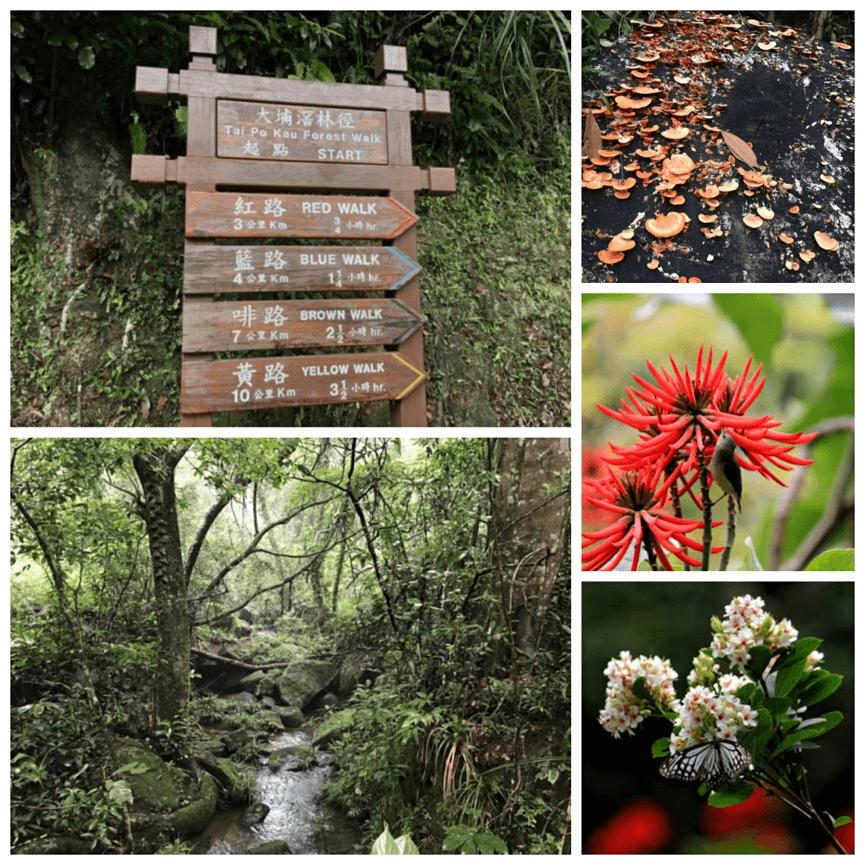 大埔滘自然護理區